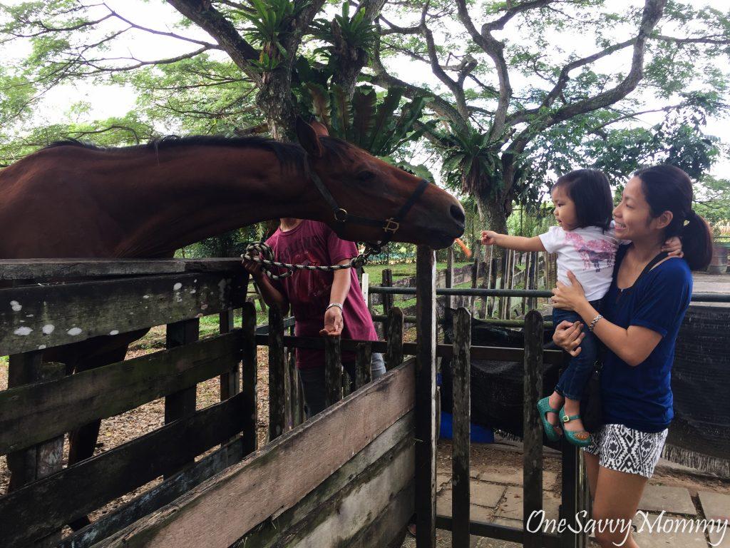 Beware Feeding Frenzy @ Animal Resort Singapore!