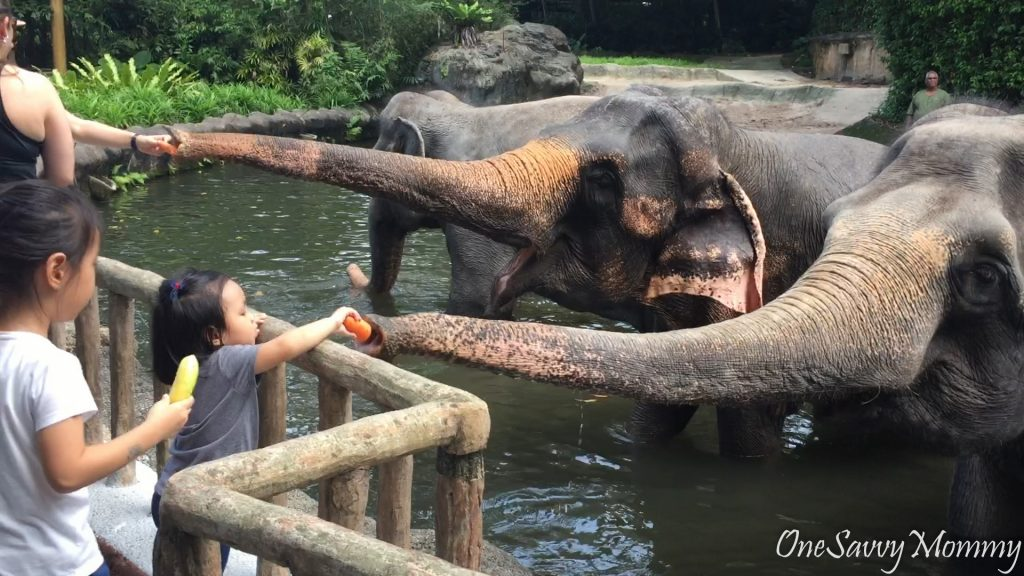 Singapore Zoo Special Experiences