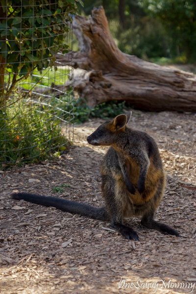 Discover Melbourne Australia with Kids